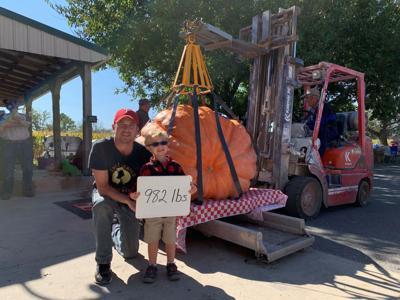 Big Pumpkins King James