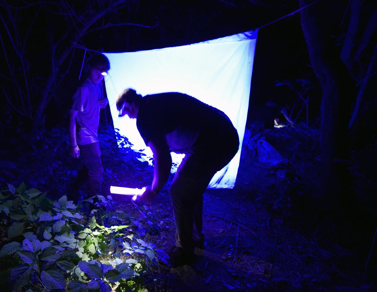 Moth Identification-Millersville University