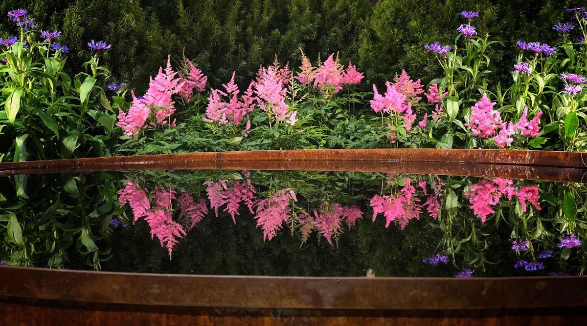 flower show reflection.jpg