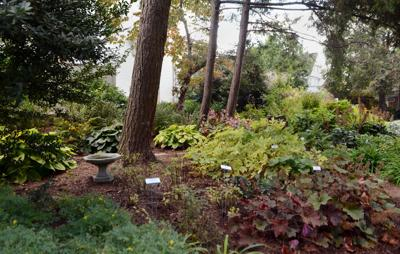 Rain Garden 7