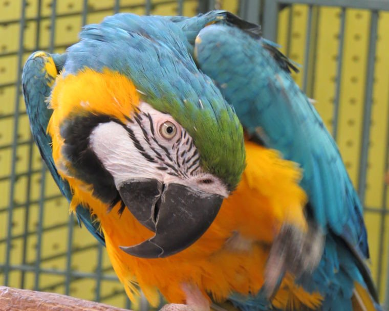 Homeless exotic birds have a sanctuary in Lancaster County ...