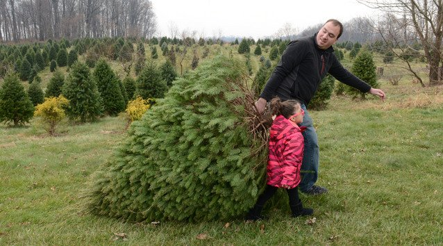 11 places to cut your own Christmas tree in Lancaster County | Together |  lancasteronline.com - 11 Places To Cut Your Own Christmas Tree In Lancaster County