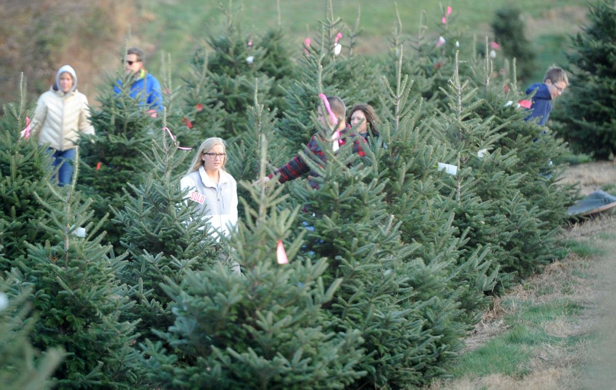 Christmas_Tree_Farm_013.jpg