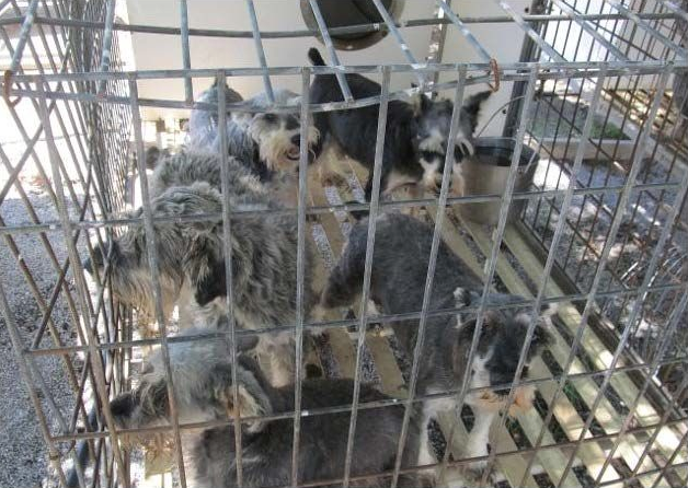 7 Lancaster County Kennels Listed Among Humane Societys Horrible