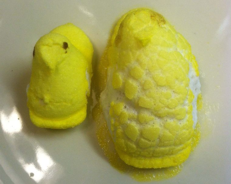 Microwave fun: before and after Peeps