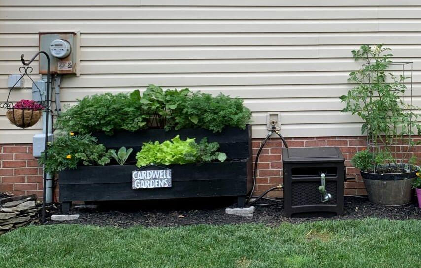 Pandemic garden Cardwell two tier planter