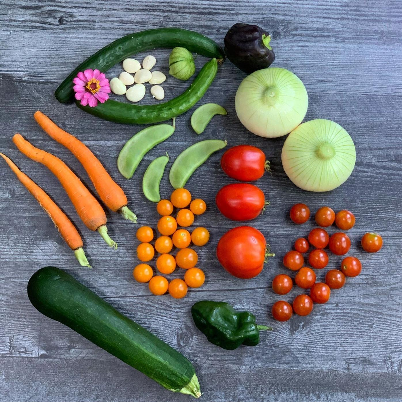 Pandemic garden Cardwell harvest