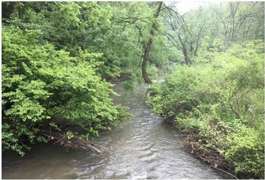 Hammer Creek 1