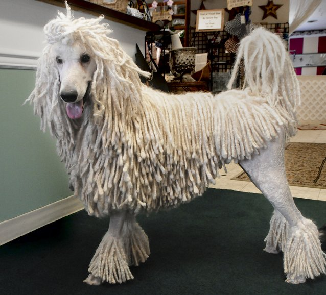 Akc Names Top Dog Breeds Local Experts Advise Lifestyle