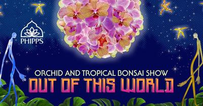 Phipps' Orchid and Tropical Bonsai Show to open Jan. 18