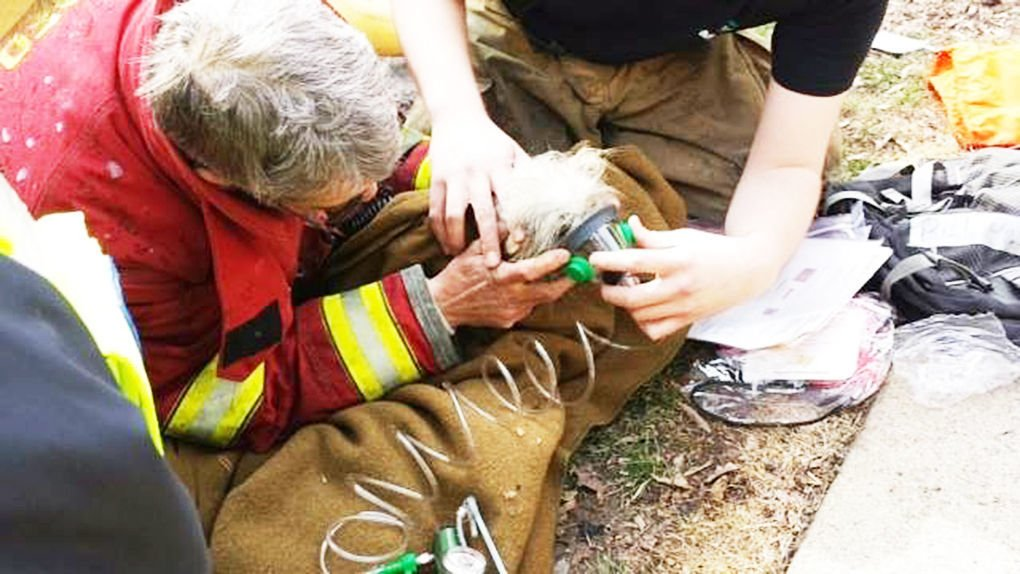 Oxygen masks saving lives of pets rescued from fires