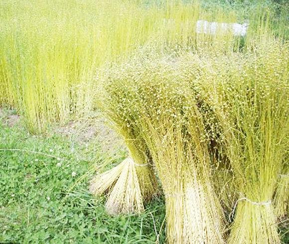 112th flax scutching festival set for this weekend