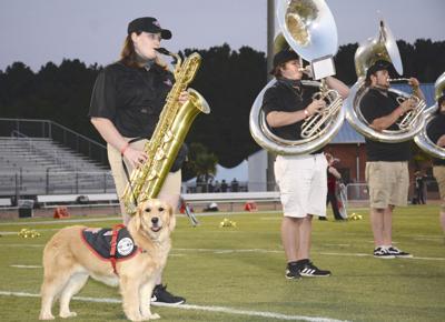JC dog band