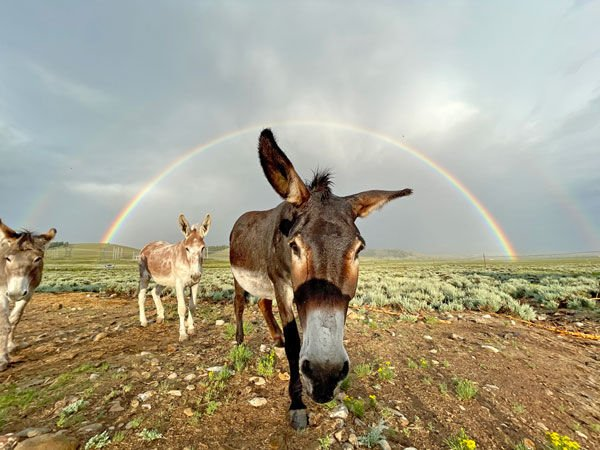 Bur-rainbow