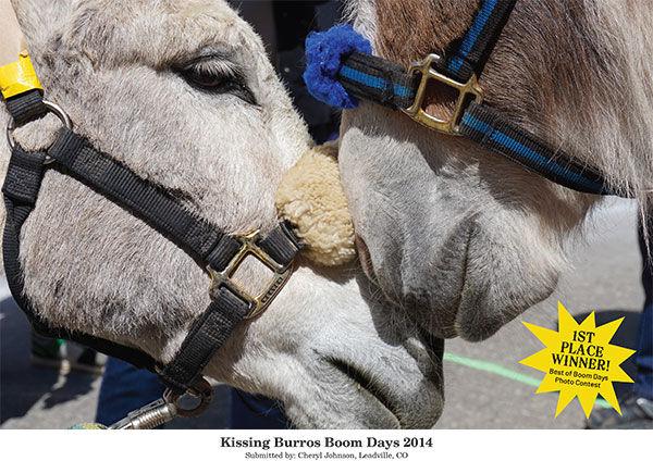 Kissing Burros Boom Days 2014
