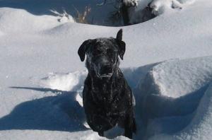 Cottonwood Veterinary Services