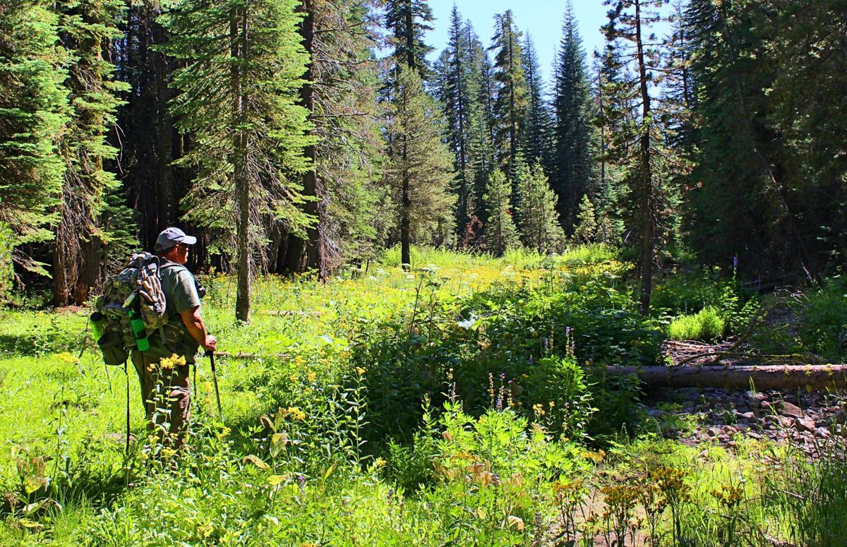 1. In this edition of Mother-Rucking, Dave Gebauer and Sarah Spinetta travelled upcountry in the Mokelumne Wilderness for a late summer hike and photography session of the still-blooming fields of wildflowers. Photo by Sarah Spinetta..jpg