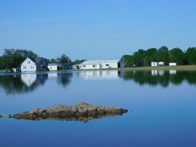 Winfield Flood