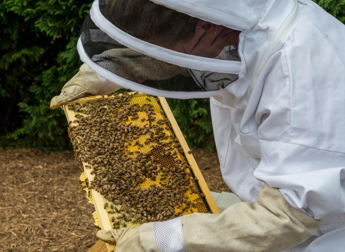 Bee Lady-2.jpg