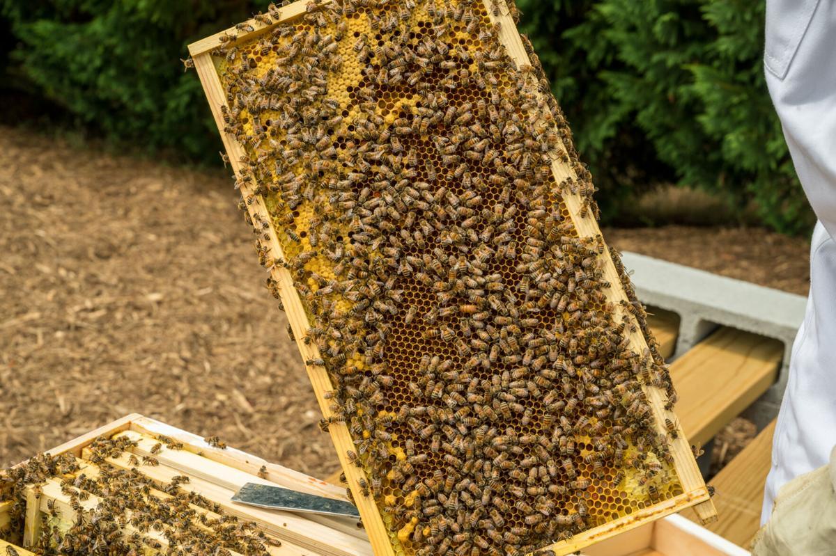 Bee Lady-3.jpg