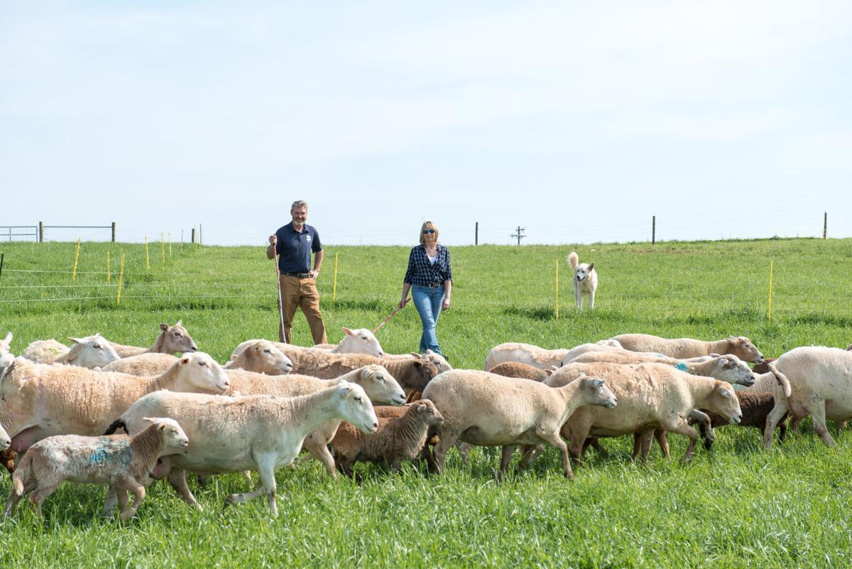 Sheep People-2.jpg