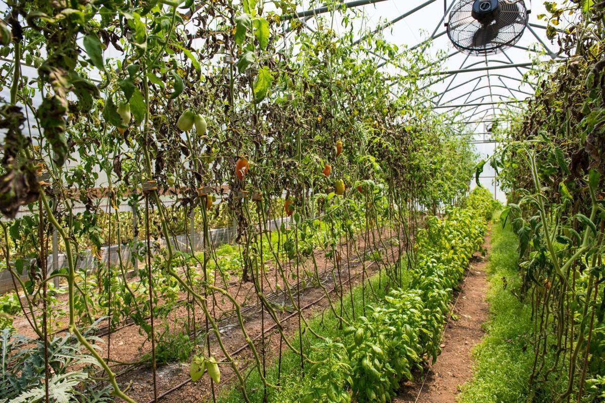 Piedmont Farm-1.jpg