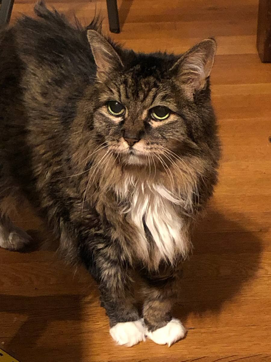 Eleanor: the oldest cat in Lewiston (we think)