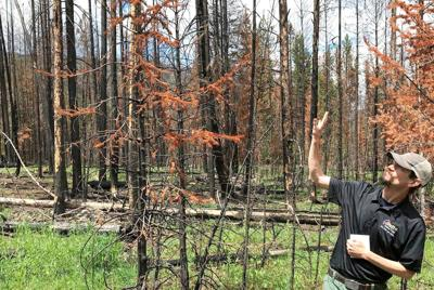 When wildfire is wanted: 'It did a great job of doing our work'