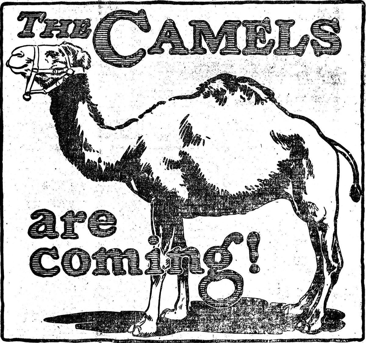 FB 0610 1914 The camels are coming.jpg