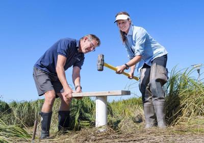 Study: Wetland restoration locks up carbon