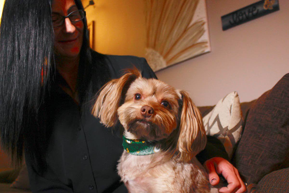 Drugs for pets are all bark, no bite
