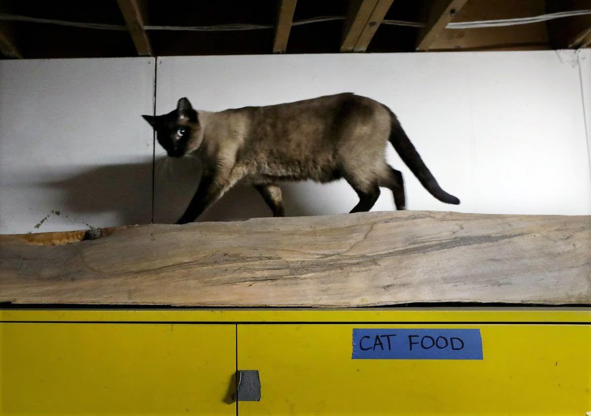 Seattle's feral cats find new lives as mousers in industrial shops