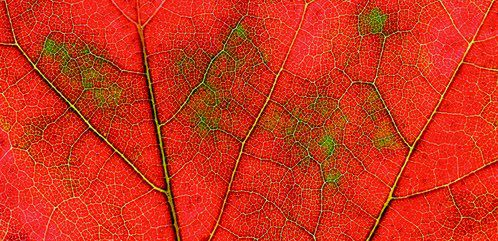 There's science behind fall's splendor