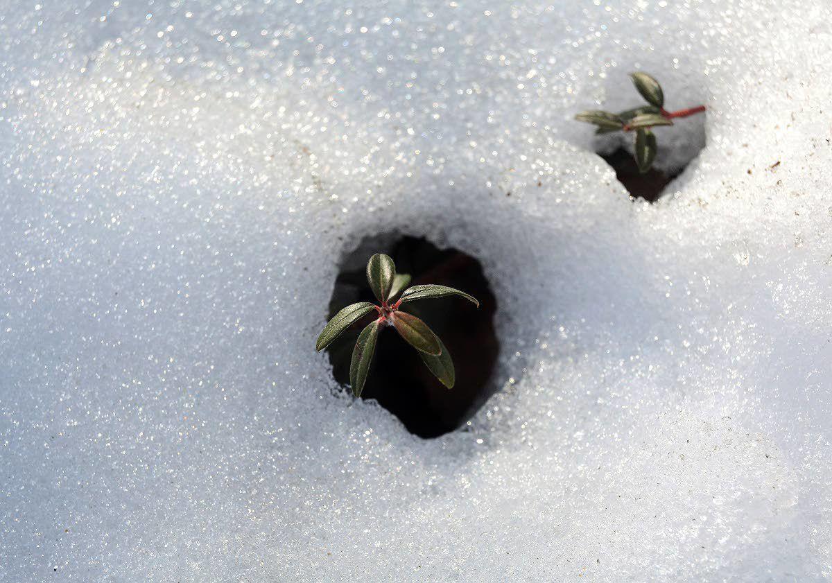 Calendar Says Its Winter But I Find >> Spring Fever Northwest Lmtribune Com