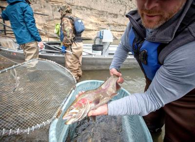 Efforts to eradicate invasive trout in Idaho river a hard sell