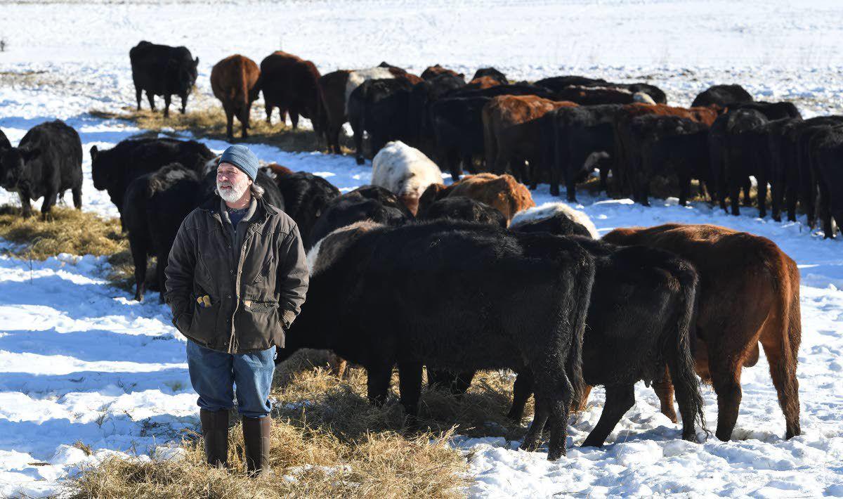Farmer, distributor raises beef to improve soil