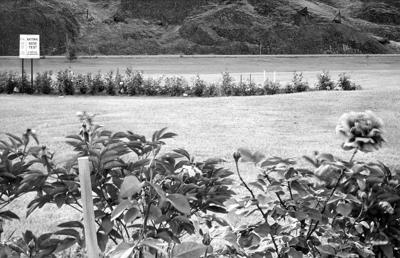Blast from the Past / 1954: Blooming where they're planted