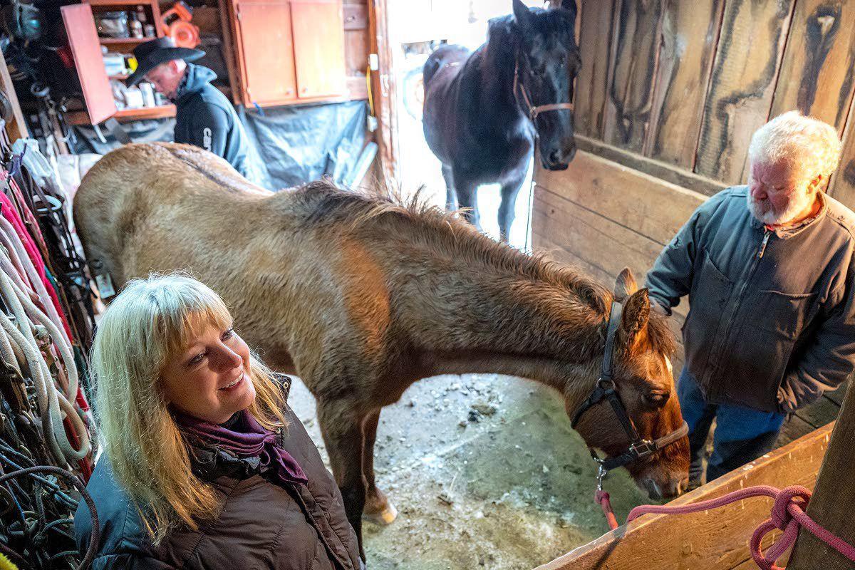 Dye's wild horse training bill falls victim to coronavirus cuts