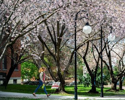 Campus in bloom