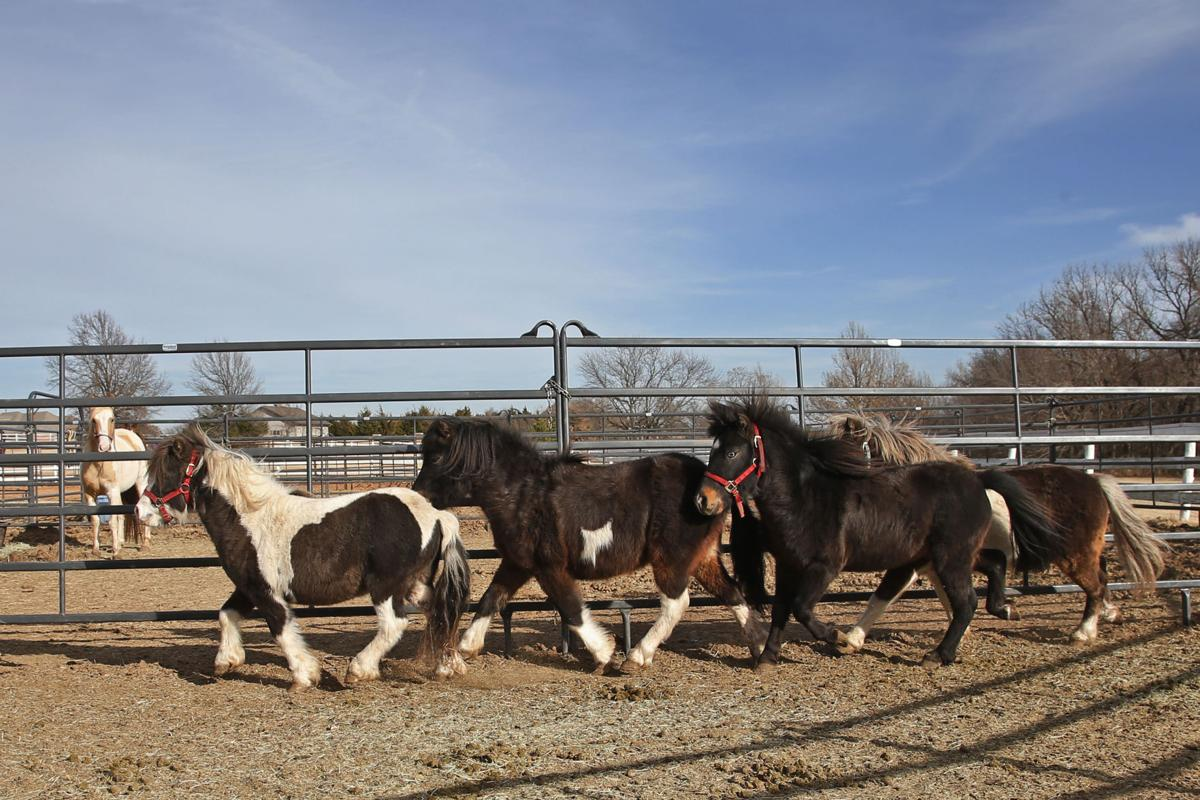 Horse Rescue Oklahoma