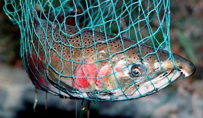 Anglers seek coho season extension