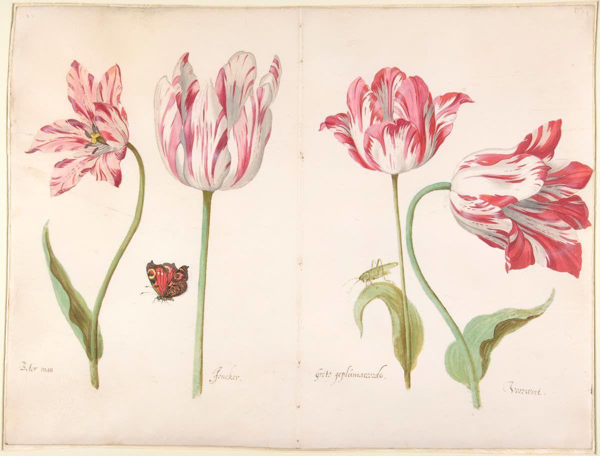 Botanical illustrations put a timely focus on nature