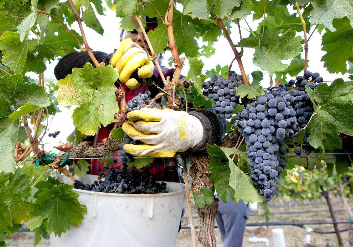 Washington, the wine state