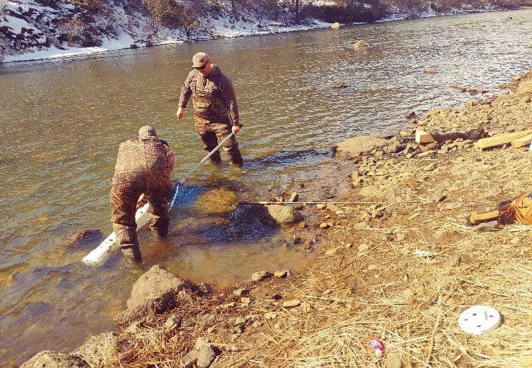 Help steelhead spawn: Public help sought to collect broodstock