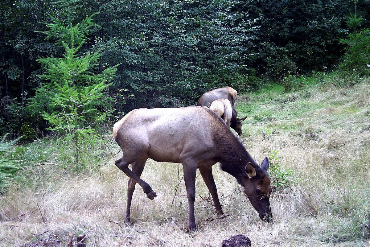 WSU gets $100,000 for elk center