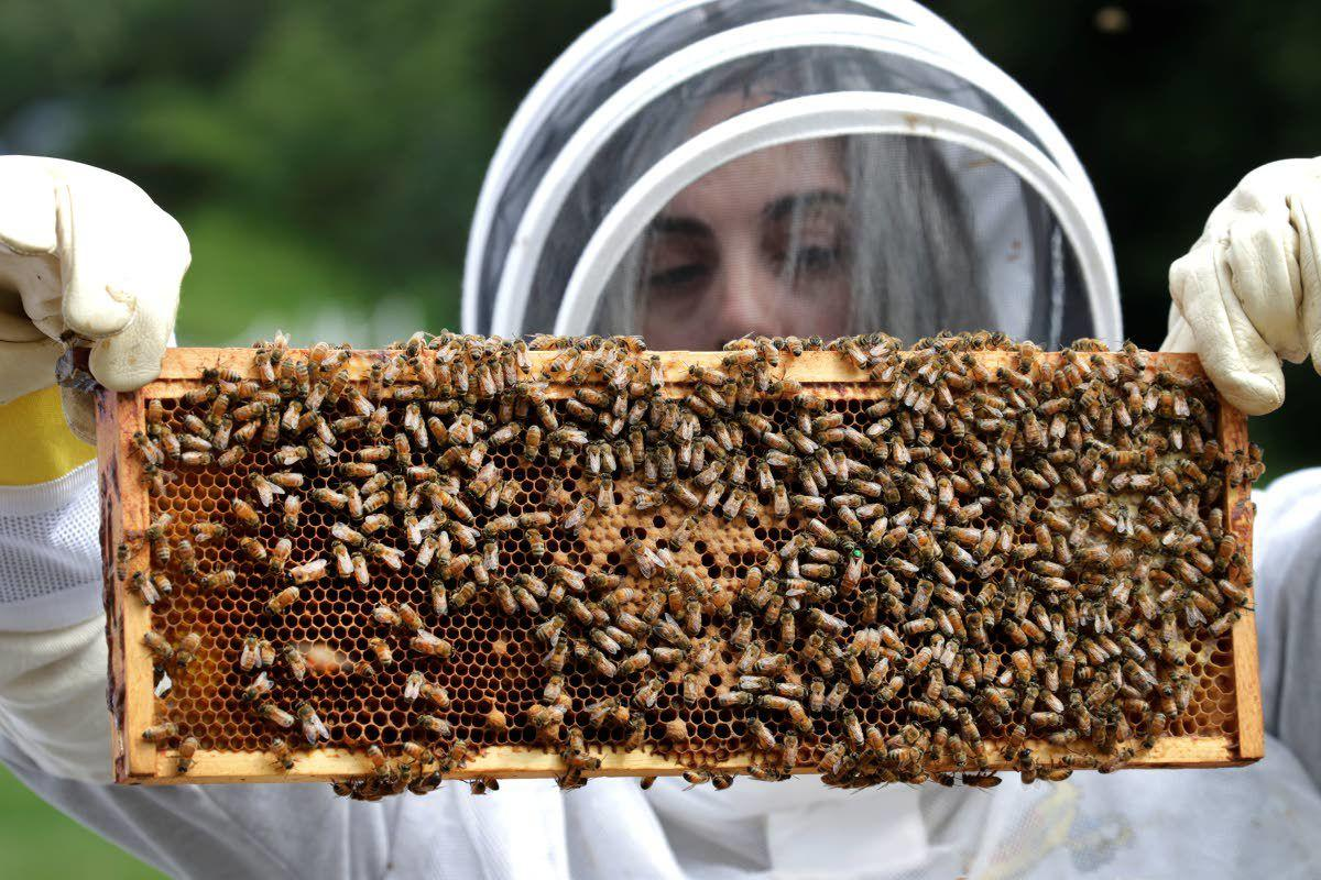Vets with PTSD turn to beekeeping for relief