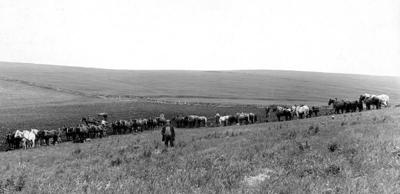 Blast from the Past / 1917: Farm work takes a lot of horsepower