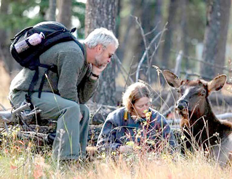 Study may offer answers on elk habitat