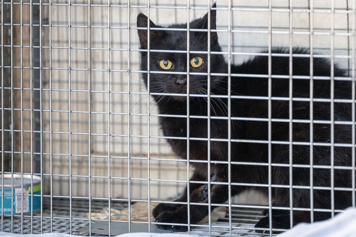 Rescue of 40 cats leads to plea from Helping Hands
