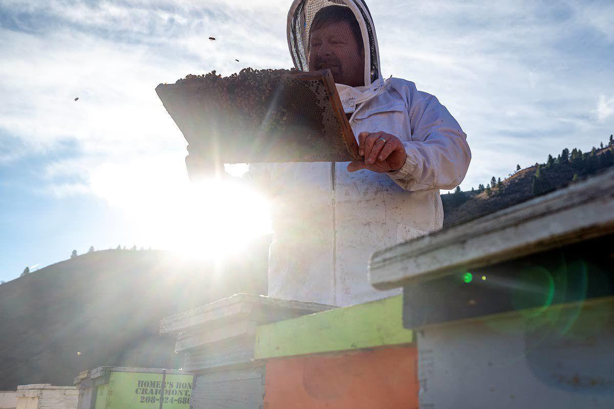 Hauling honeybees